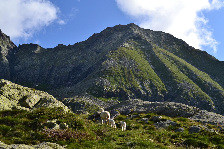 pecorelle e Punta della Rossa