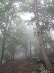 Si sale nella nebbia