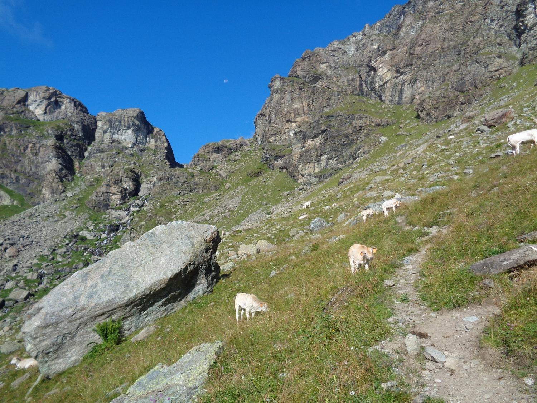 Trento (Punta) da Meire Dacant per il Passo Gallarino 2014-08-15