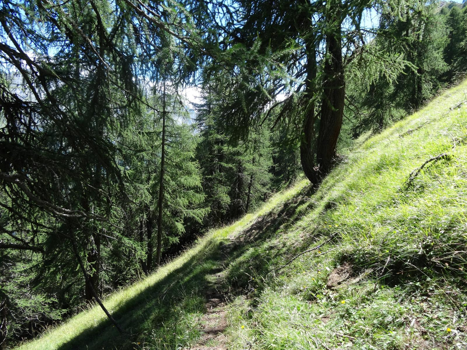 prima parte del sentiero 1
