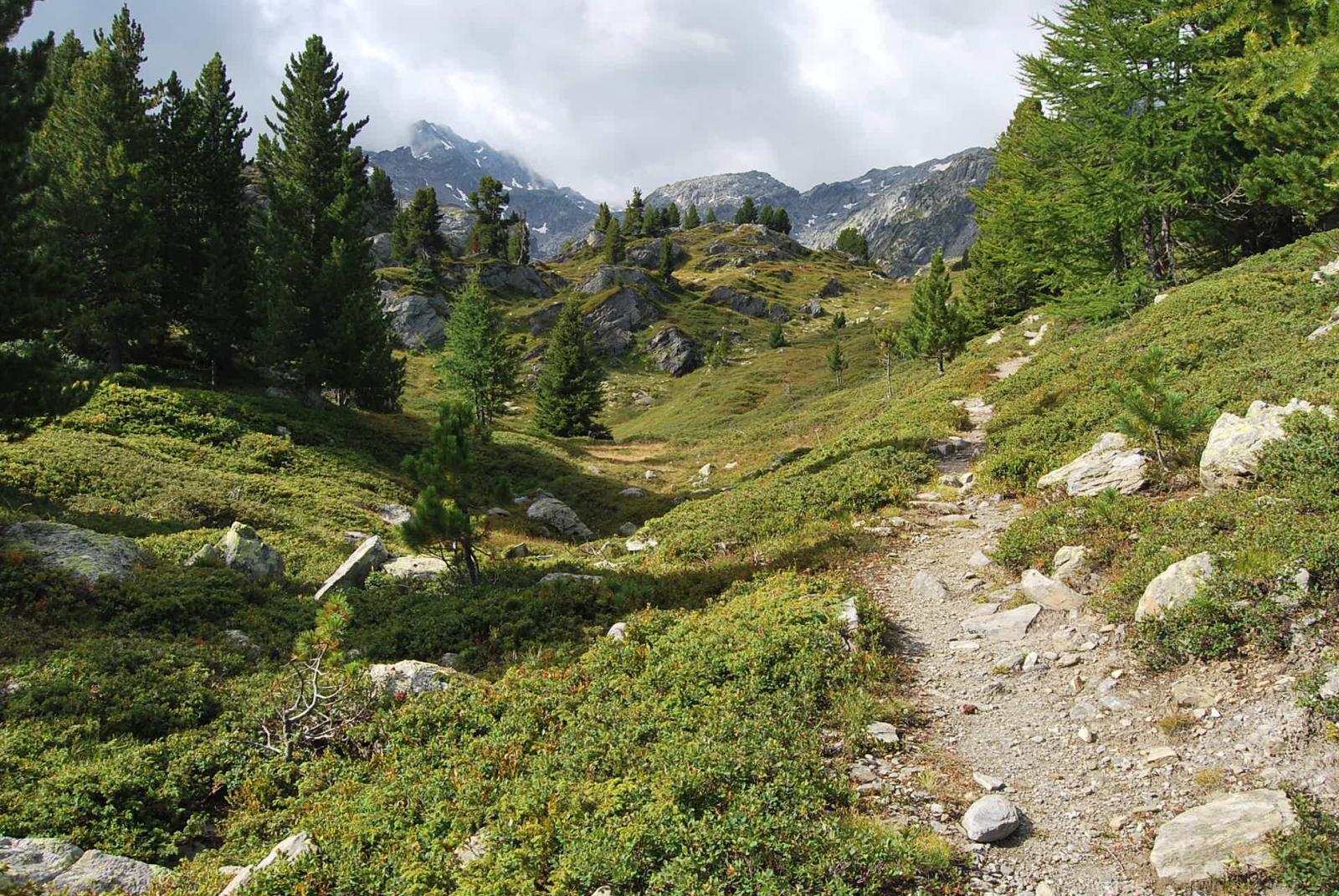 L'entrata del sentiero n. 7 nella Comba Sozin; sullo sfondo le pendici del Freduaz.