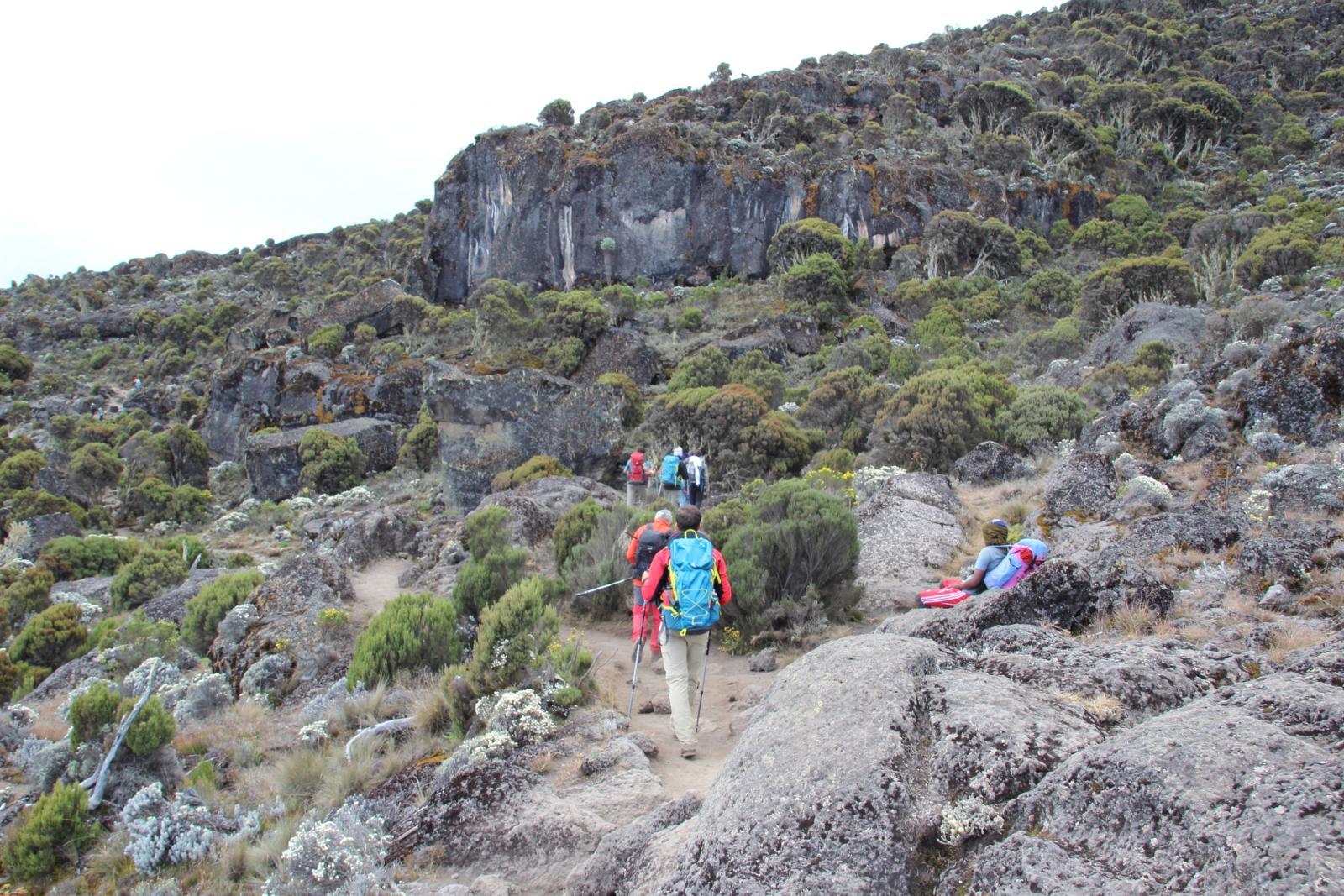 la vegetazione inizia a diradarsi intorno ai 3600 metri di quota (22-8-2014)