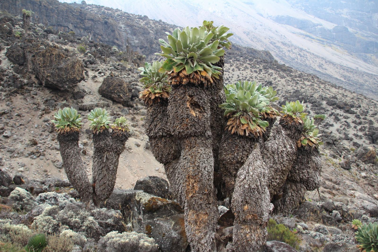 spettacoli naturali nella Barranco Valley (23-8-2014)