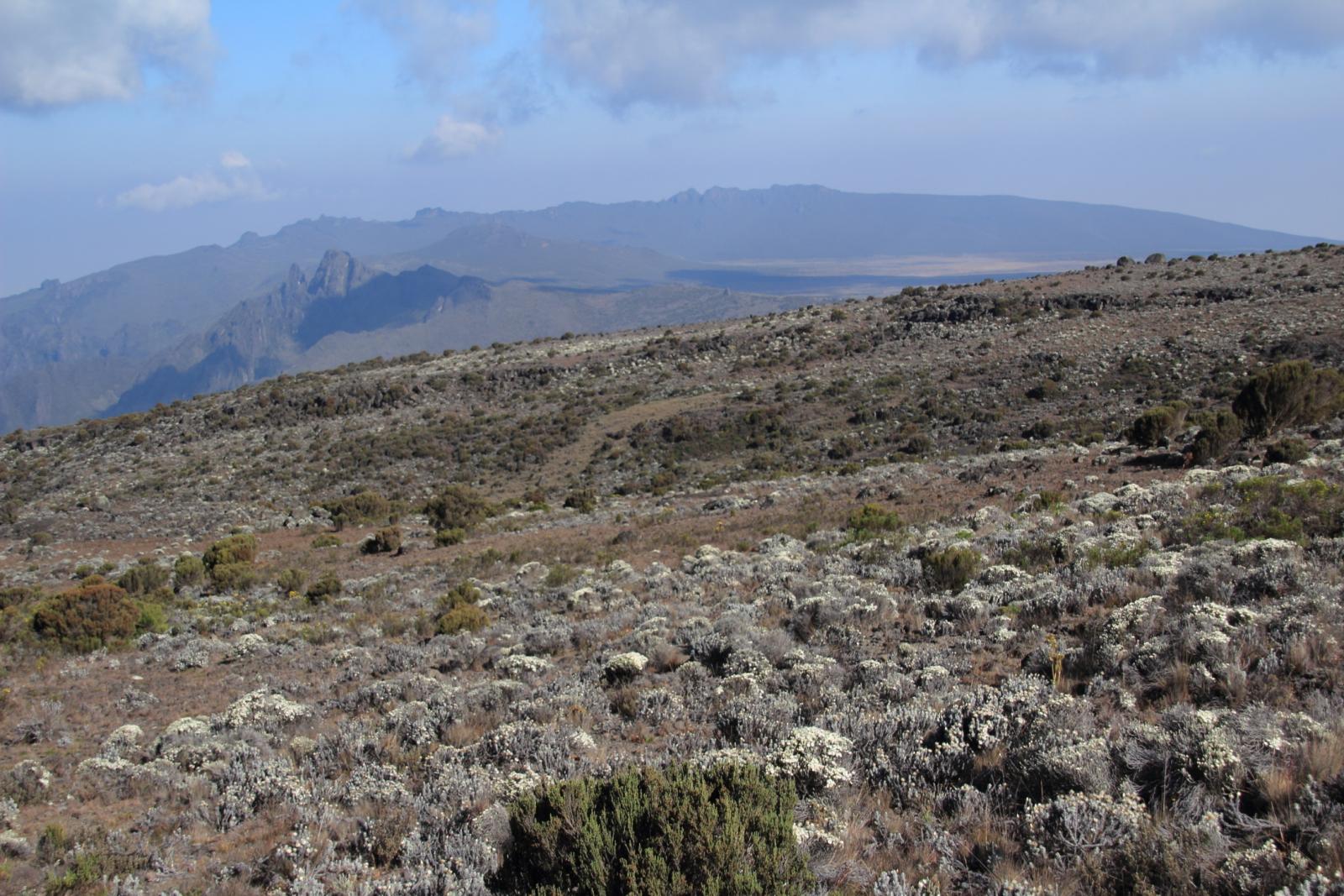 la vegetazione si dirada a quota 4100 m. verso il Lava Tower (23-8-2014)