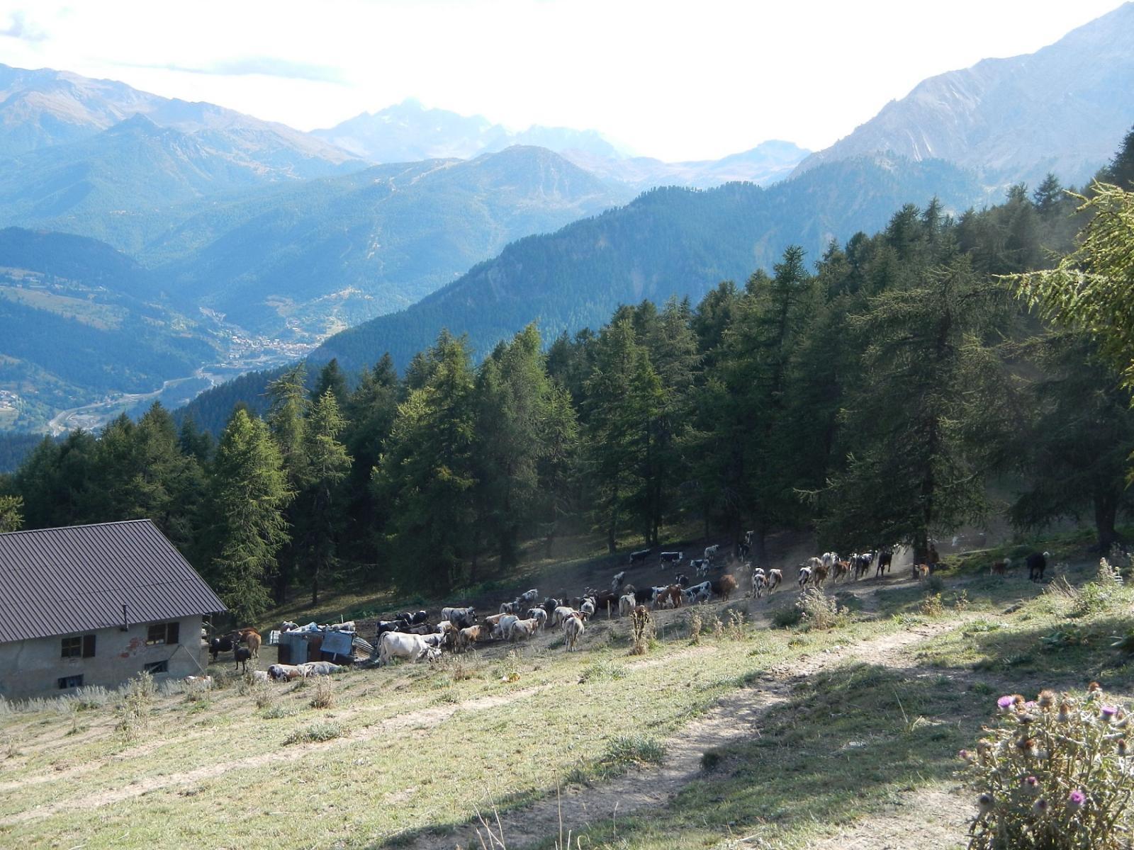 località Pourachet 2027 m.