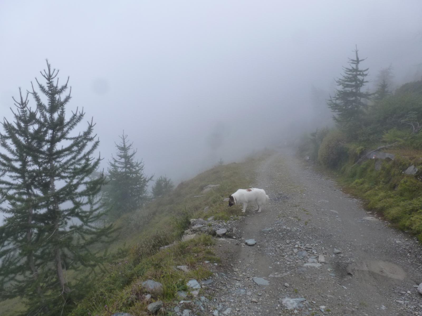arrivano le nebbie