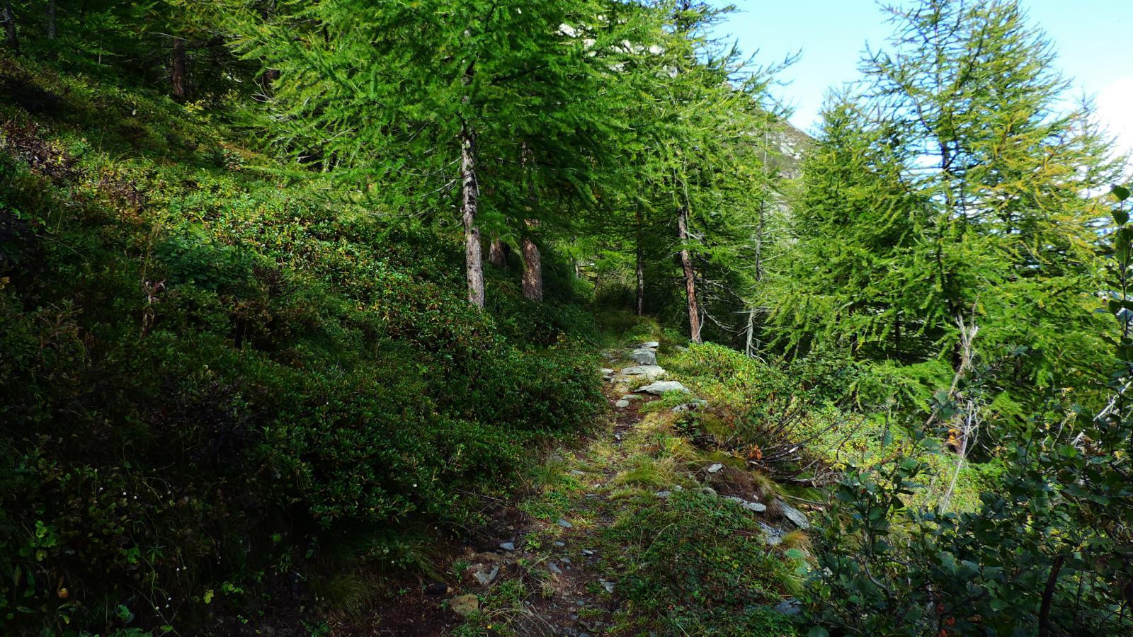 il bosco iniziale sopra il Lago Arpone