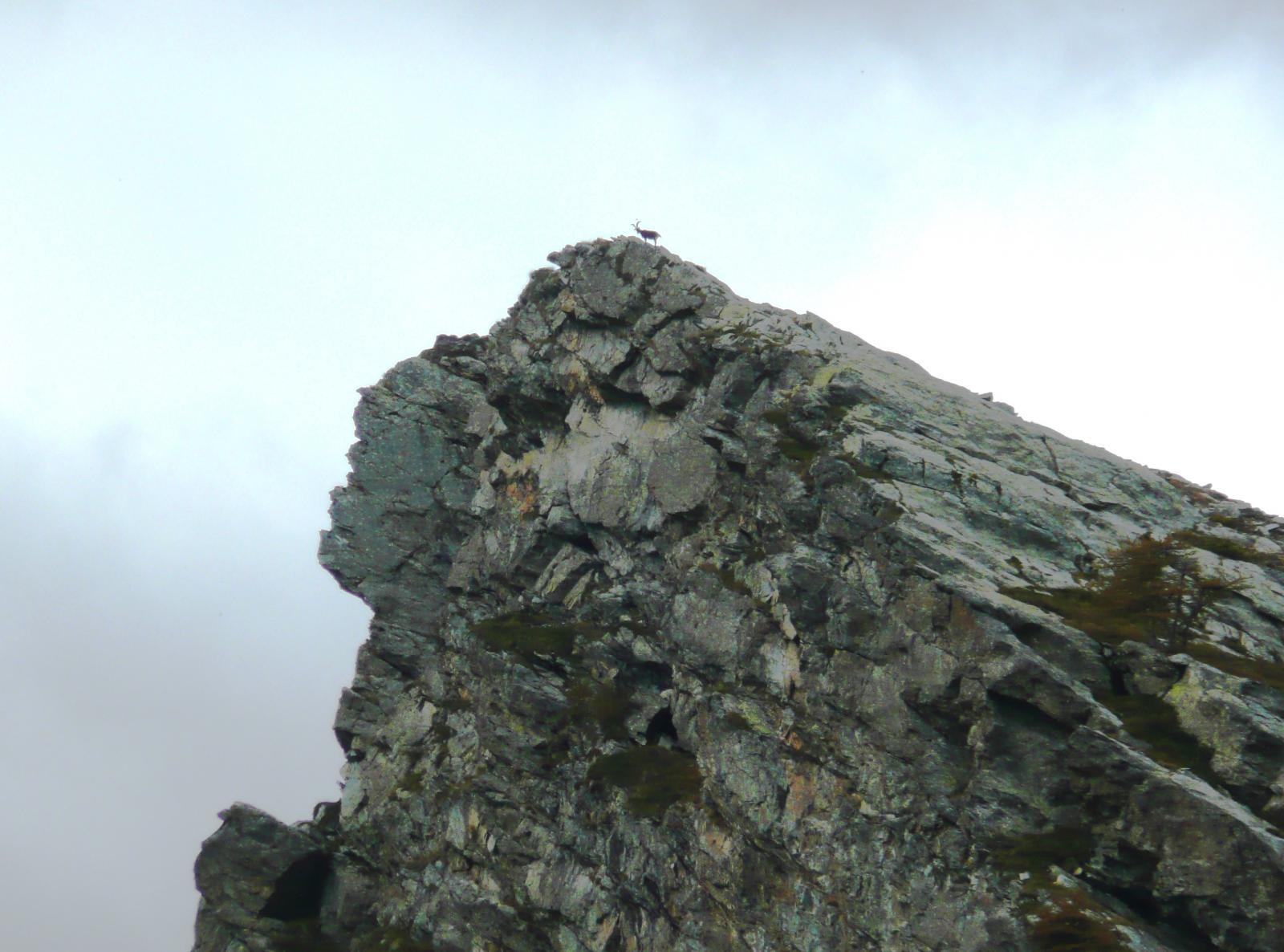 sulla cima il re al posto che gli compete (gli alpinisti saliranno anche le pareti verticali, ma restano degli intrusi)