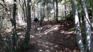 La pista nel bosco