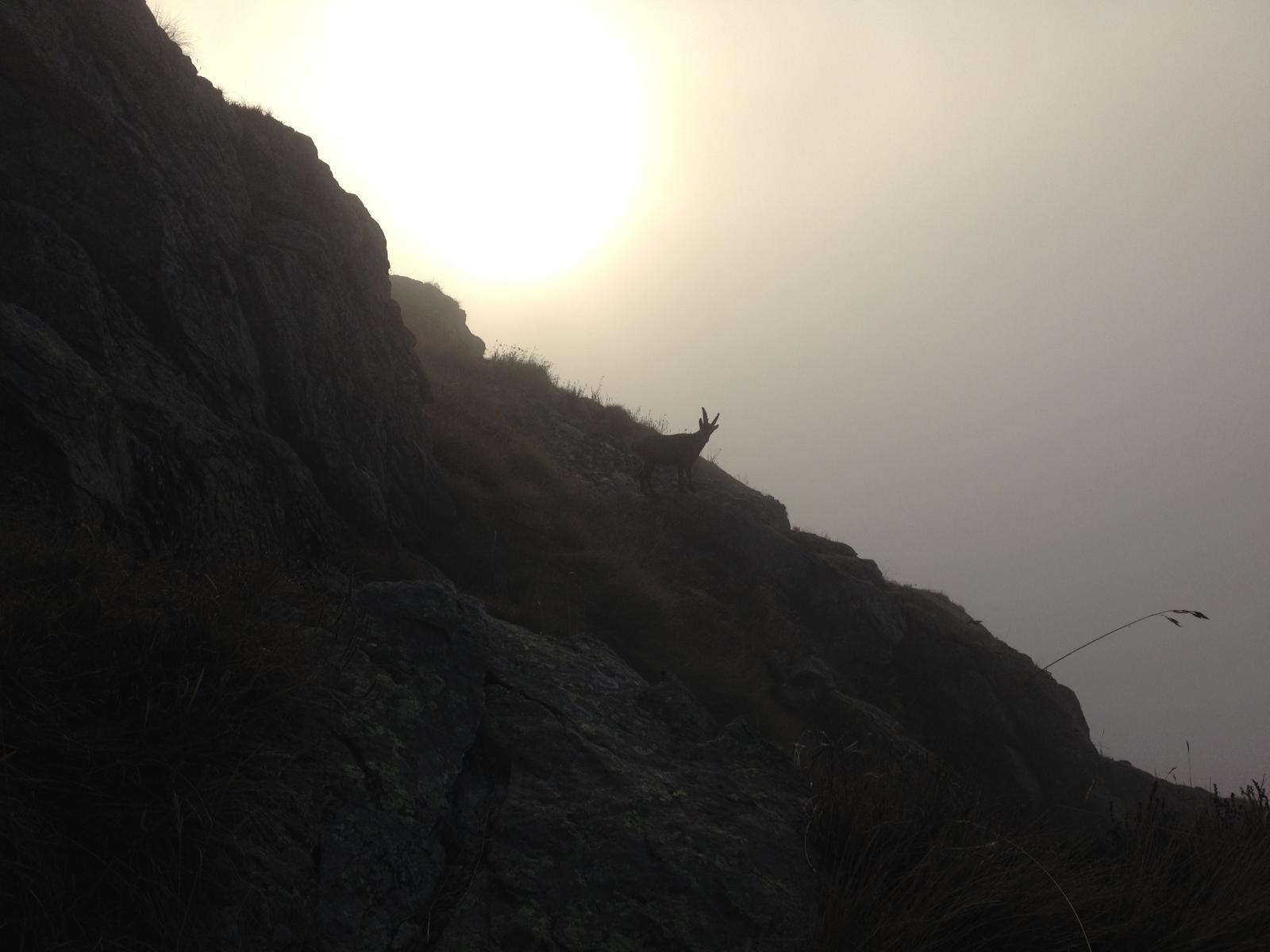 Stambecco nella nebbia