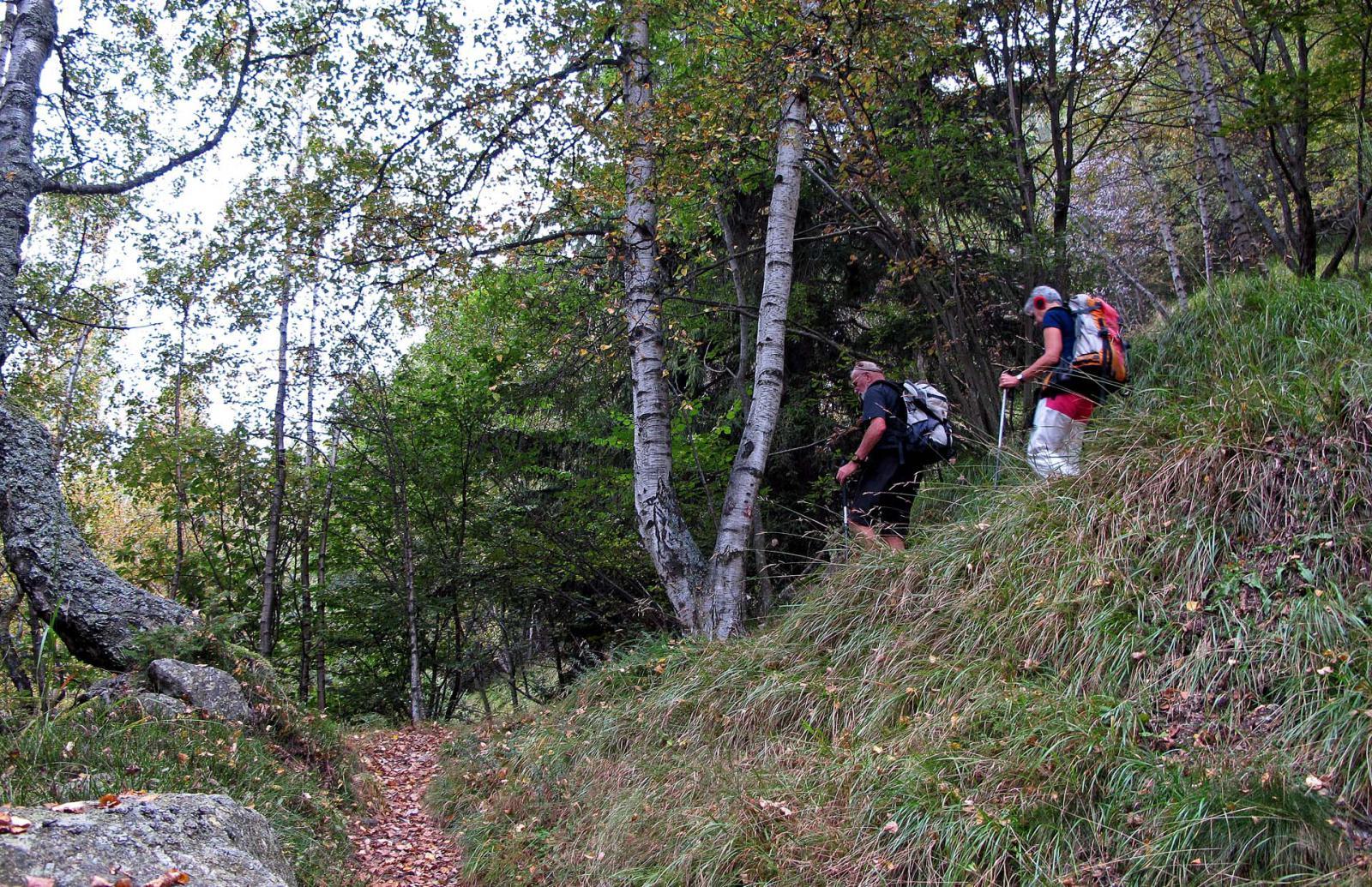 Ben segnato il sentiero nel bosco