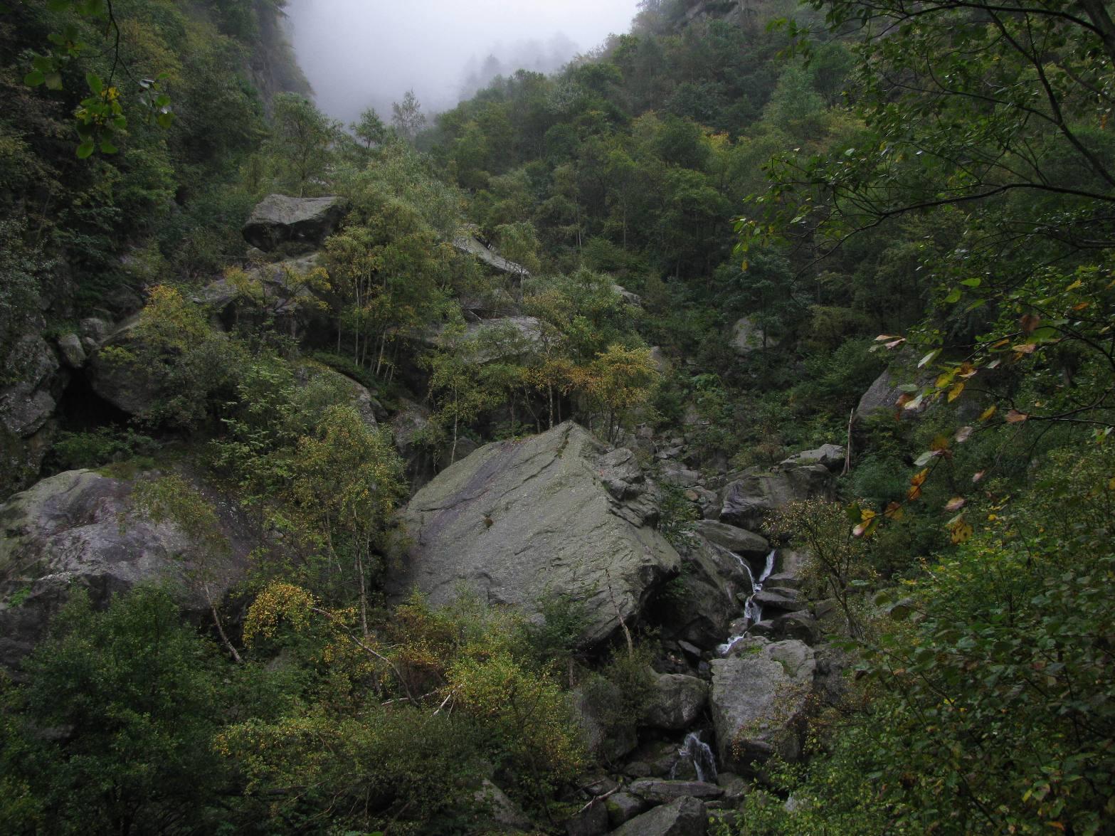 Da un varco della boscaglia, l'incassato vallone del Rio Lavenca