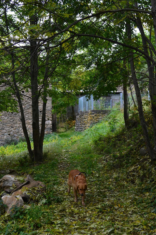 ritorno a Torrent dove inizia il sentiero nel bosco