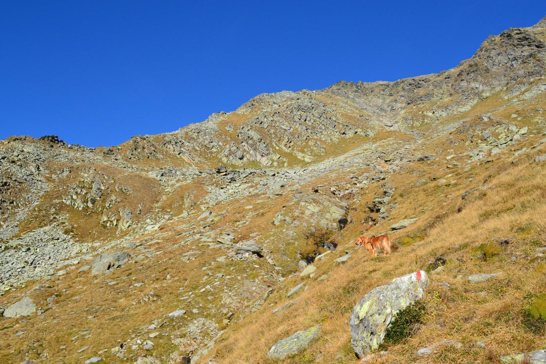 sentiero ben segnalato tra pascoli e qualche roccetta