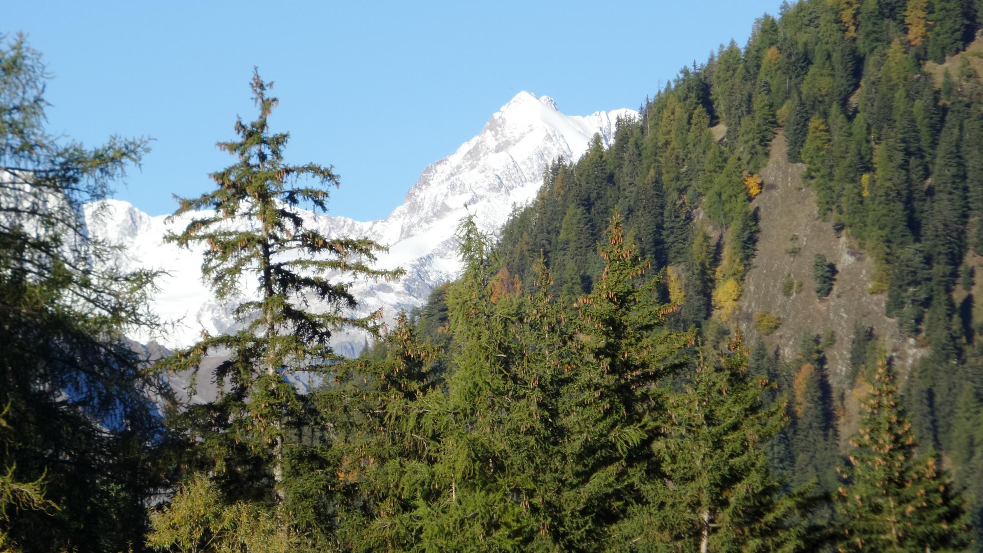 scorci di panorama dal bosco iniziale verso l'Aiguille de Trelatete
