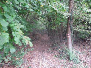 si entra nel bosco