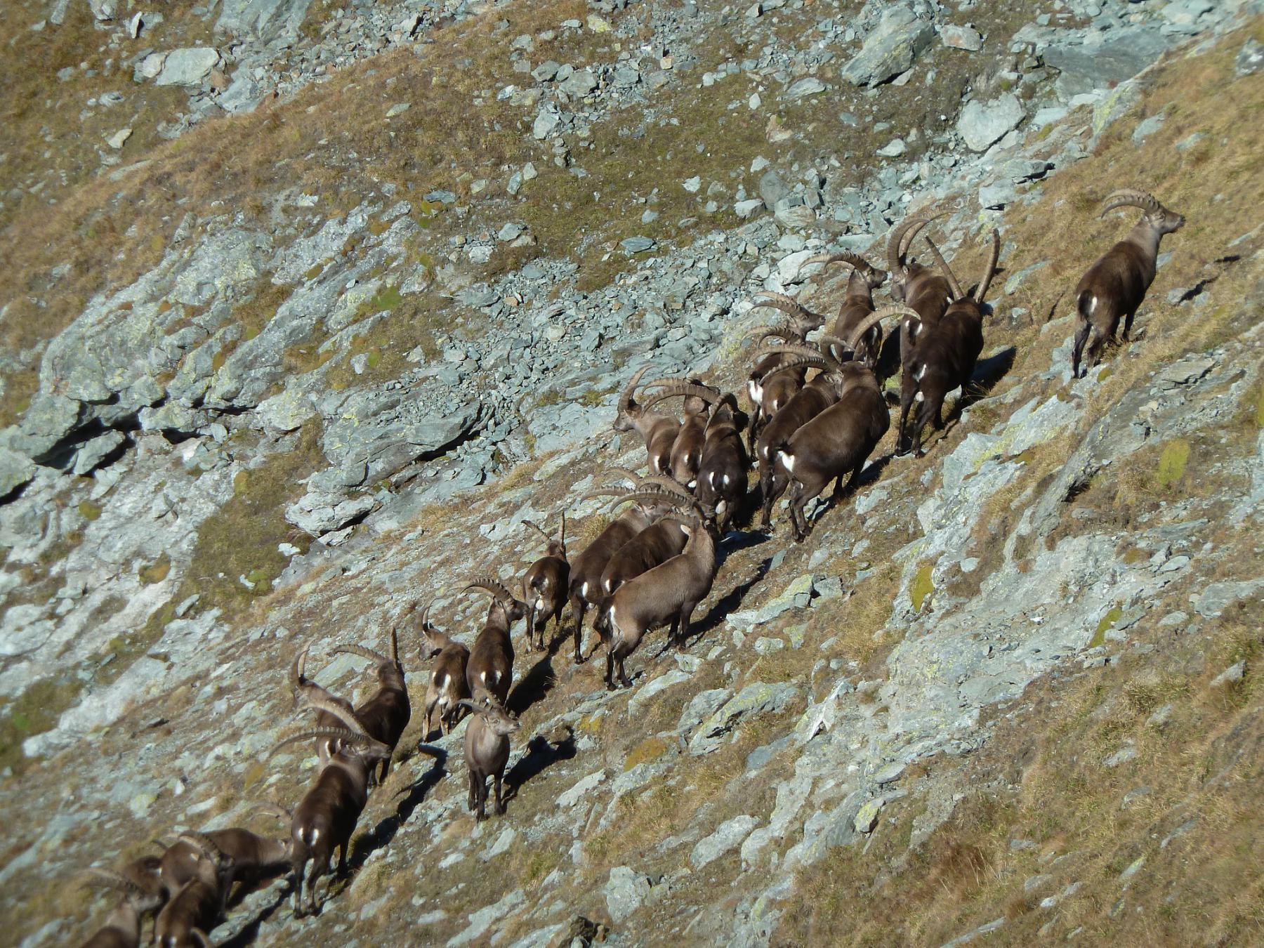 assemblea sindacale fauna di montagna