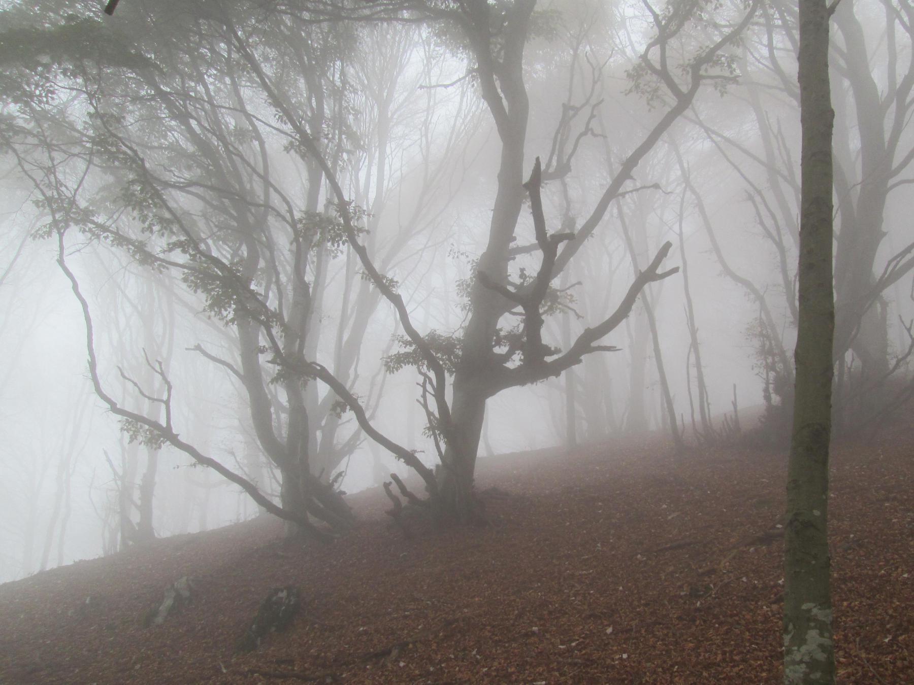 partiti con una nebbia fitta