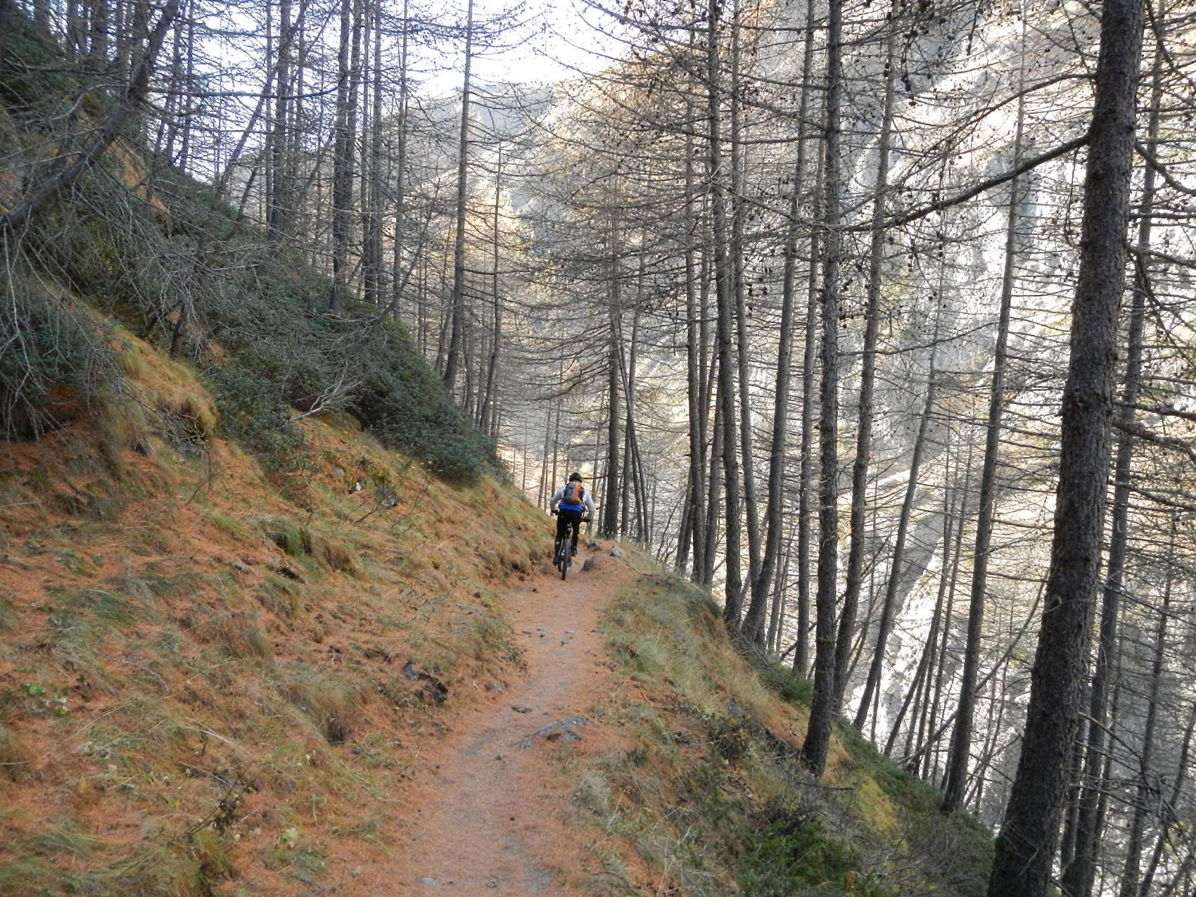 il lungo tratto di sentiero nel bosco di larici