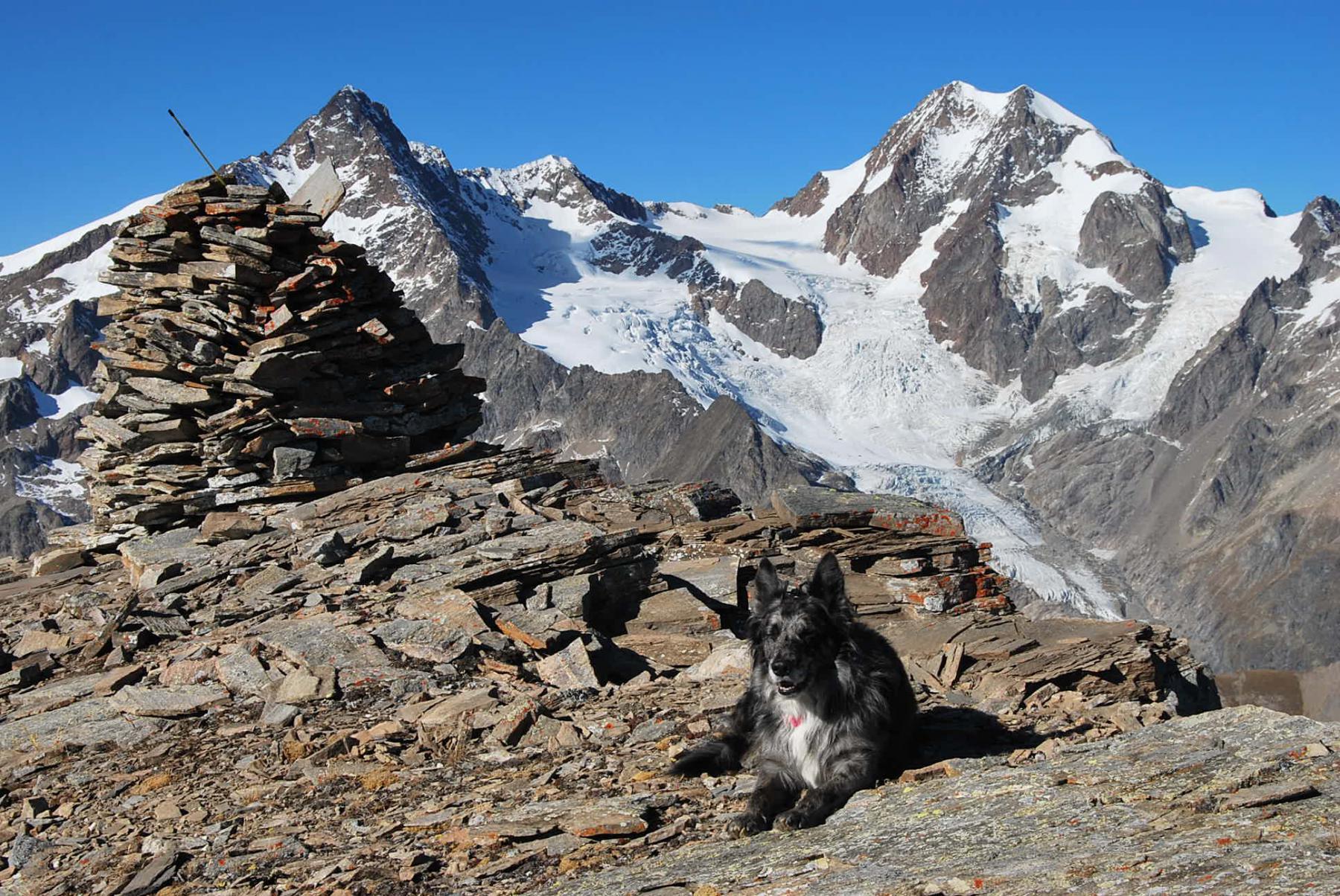 In vetta !! Frank, il mega-ometto e la catena dall'Aig des Glaciers al Trelatete