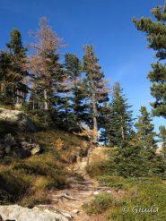 Nel bosco prima dello Chalet des Adus