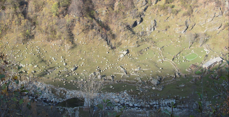 Tante pecore viste dall'alto