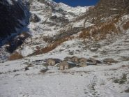 l'alpe Crosenna( agriturismo)