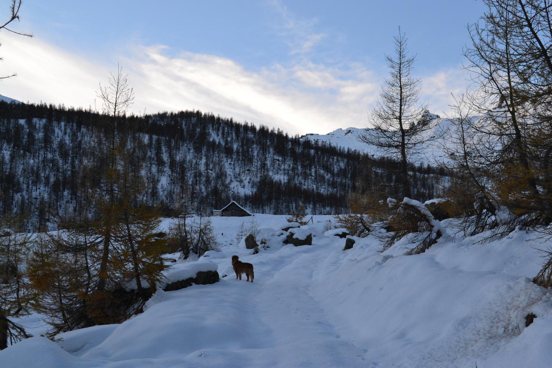 in vista dell'Alpe Vallé