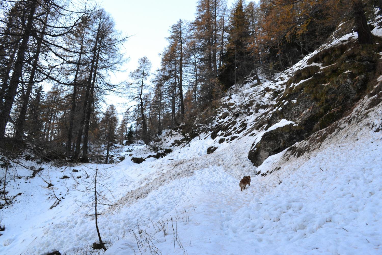 altre slavine lungo la strada per l'Alpe Vallé