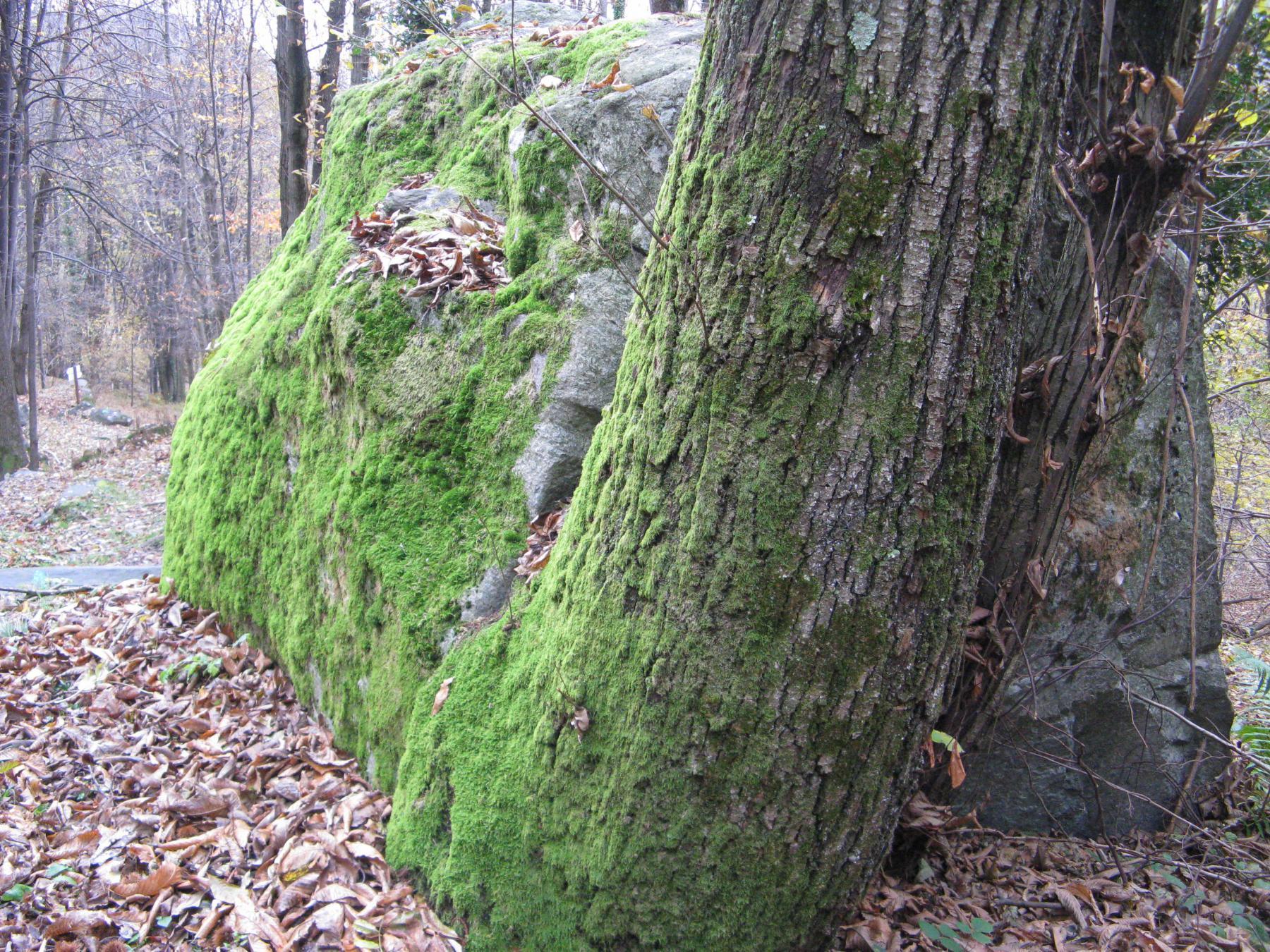 Scorcio del bosco
