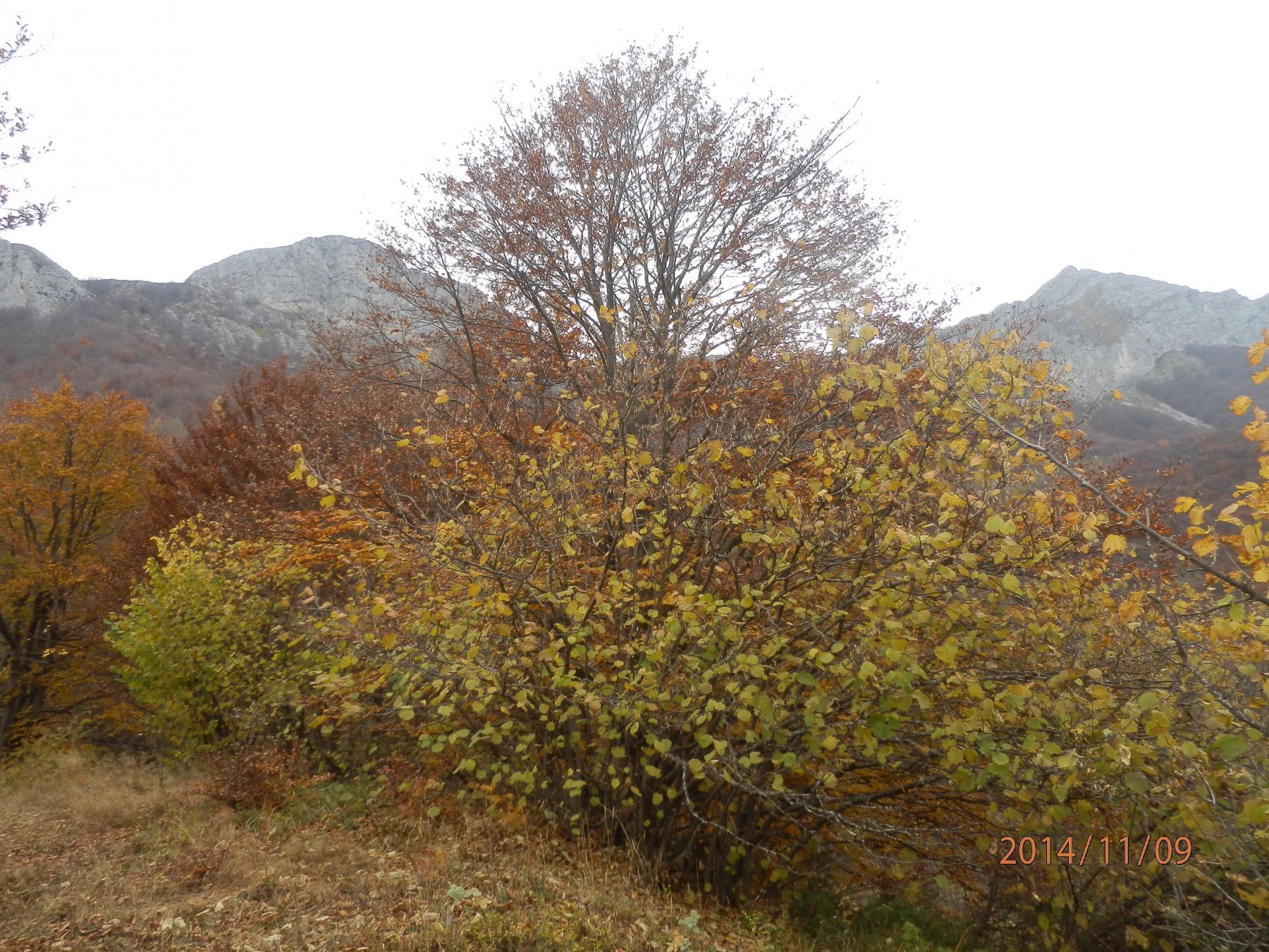 1-...a q.1300 si apre la vista sulla Rocca (sx), il Passo Giorsin(centro) e le Rocce della Scregna(dx)
