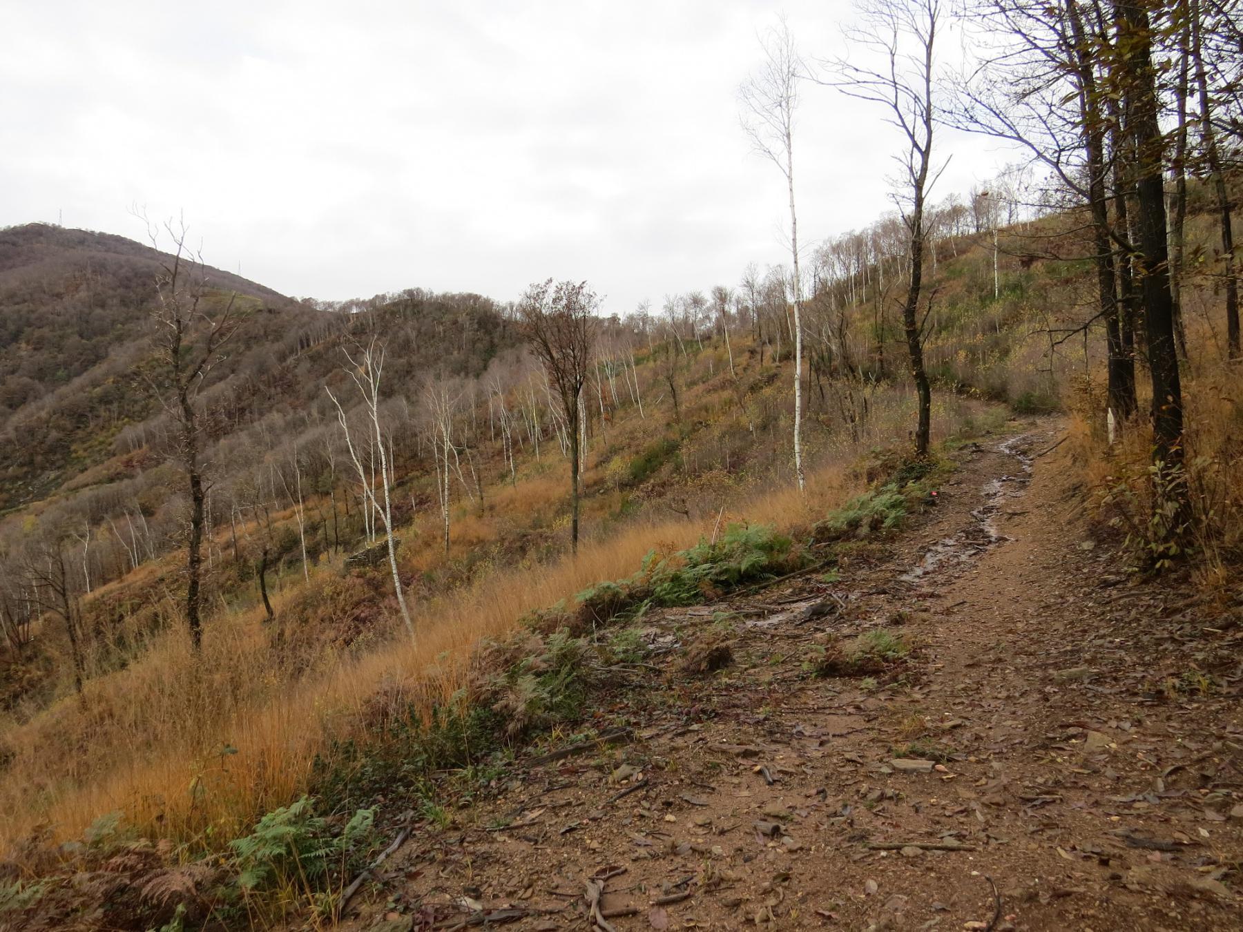 Tratto di sentiero cannibalizzato dalla brutta pista forestale