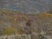 I colori del bosco autunnale