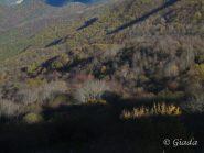 Le lunghe ombre sul bosco