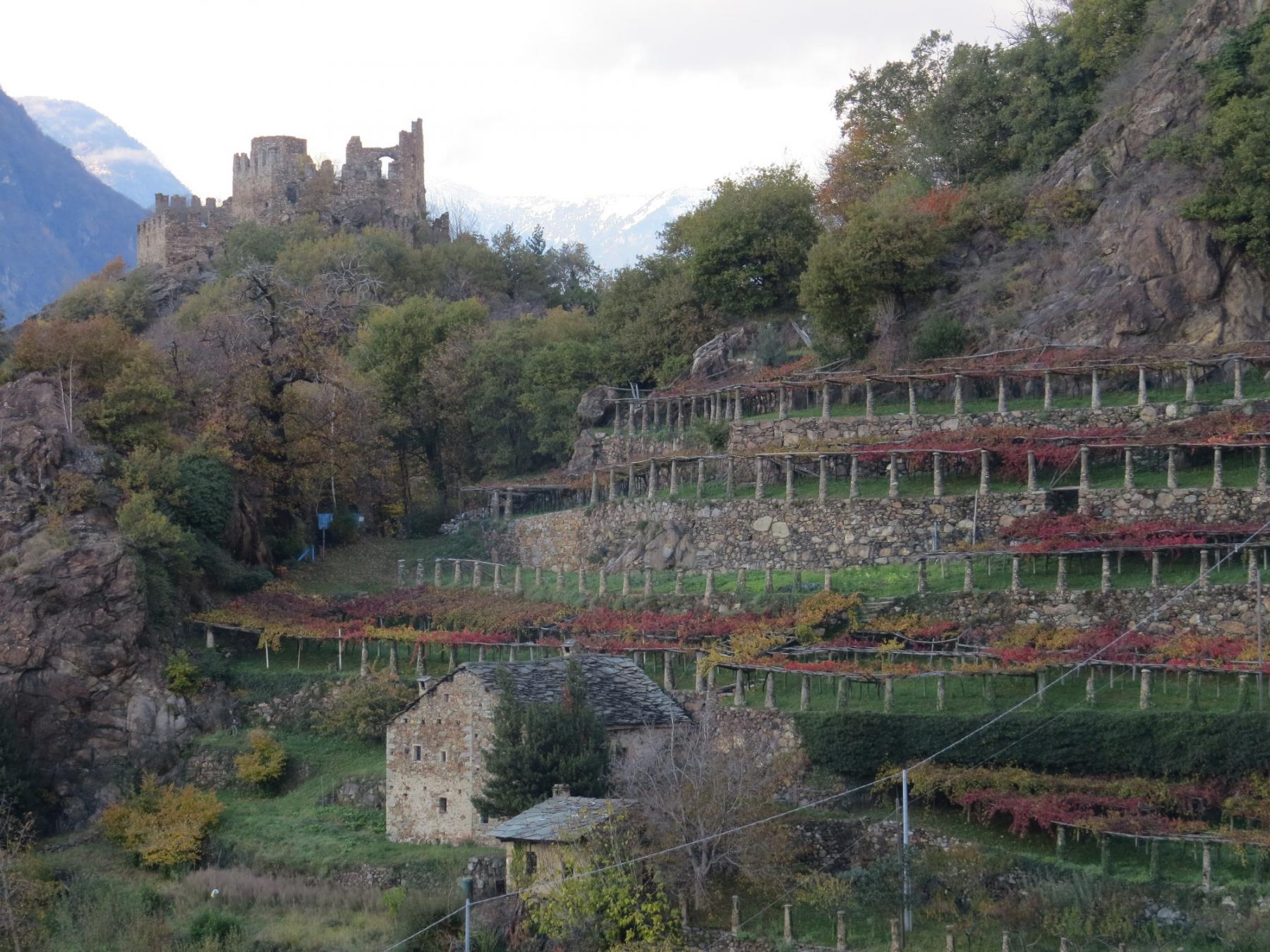 A Cesnola, Castelletto e topie in colore