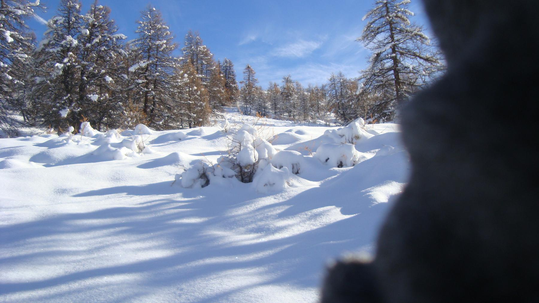 viva la neve