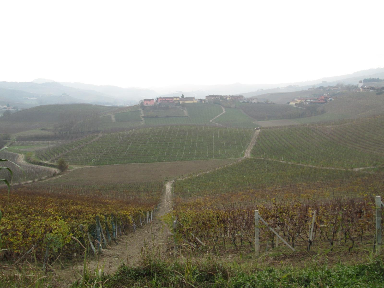Alba - Tra passato e Presente 2014-11-20