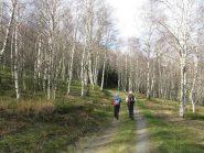bel bosco nel tratto iniziale