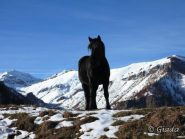 Meravigliosi cavalli alle Grange Fumei
