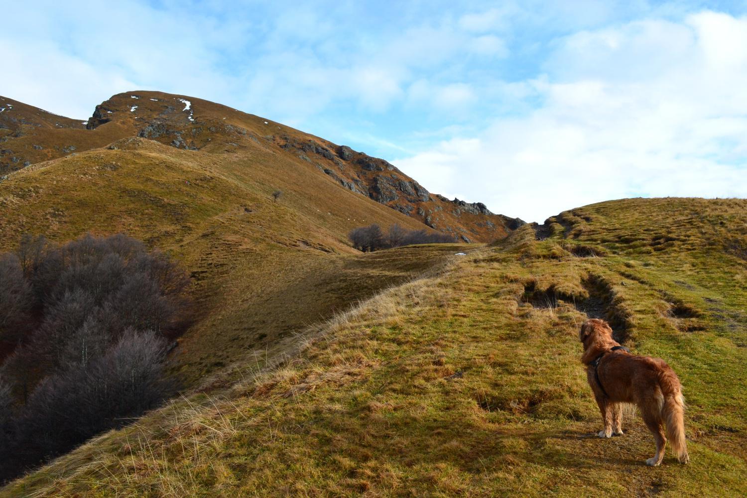 la dorsale erbosa che dal Passo del Gandazzo conduce in vetta