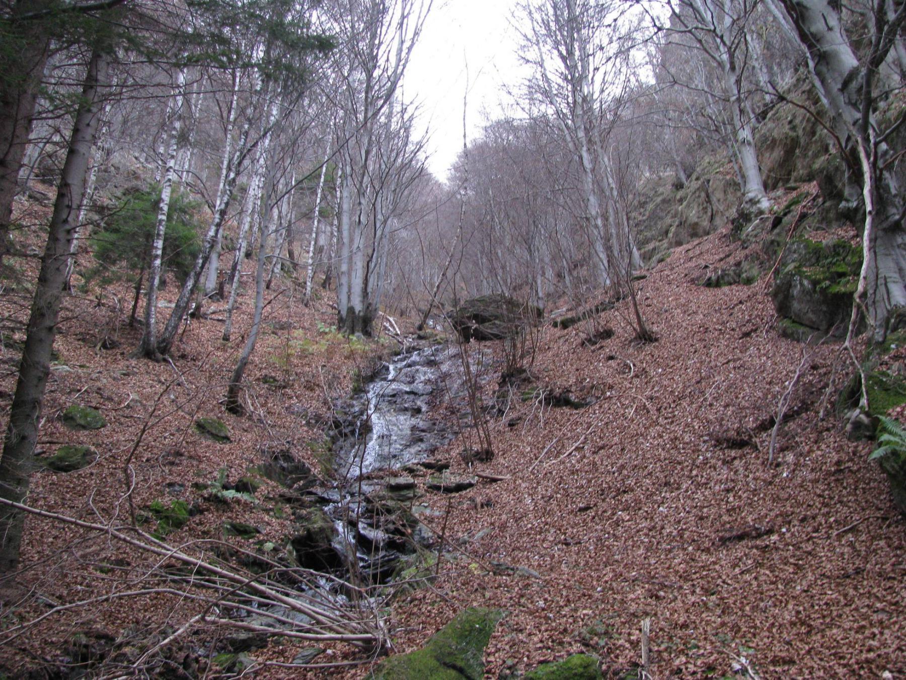 Il rio laterale di Cudrai
