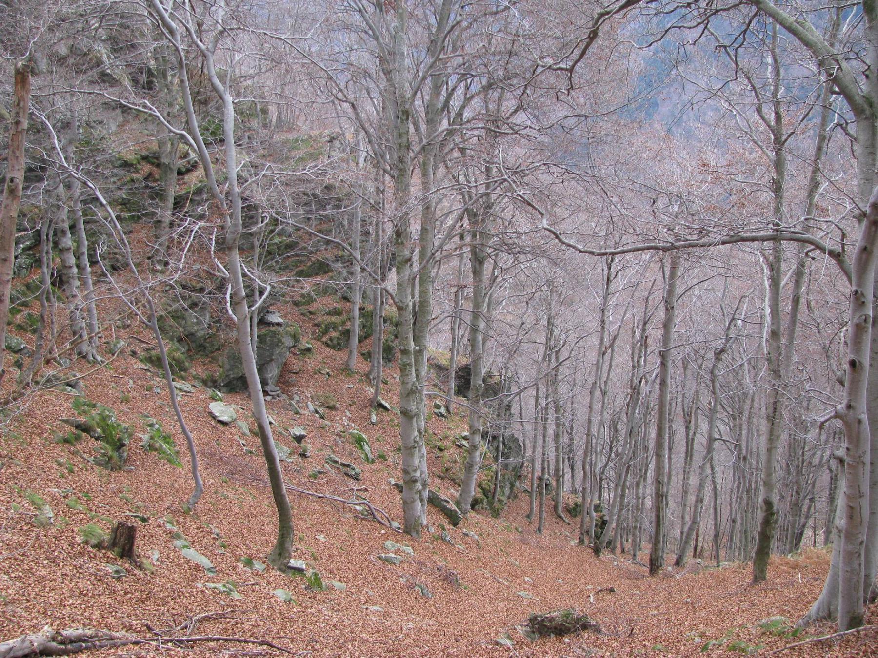 Saler (Cima) da Furnè per Rongorbogno 2014-12-13