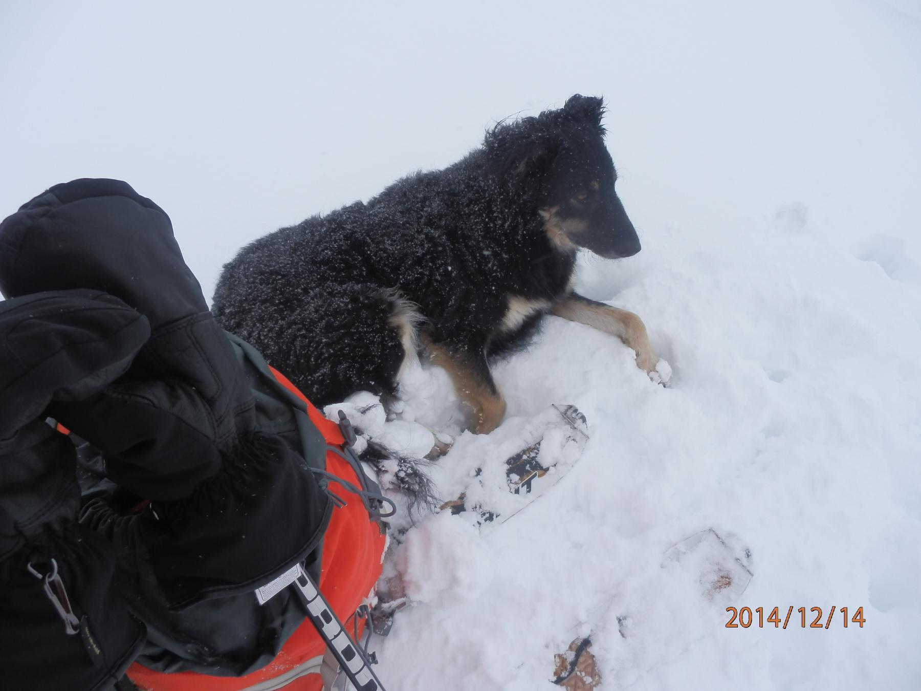 riposino nella neve..pensando alla cuccia calda di casa