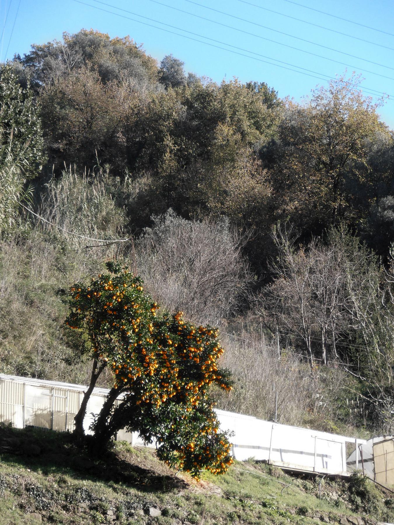 Argentea (Monte) da Arenzano, anello 2014-12-24