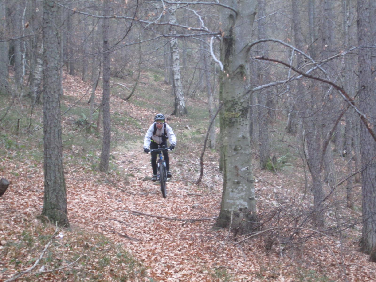 bel tratto nel bosco