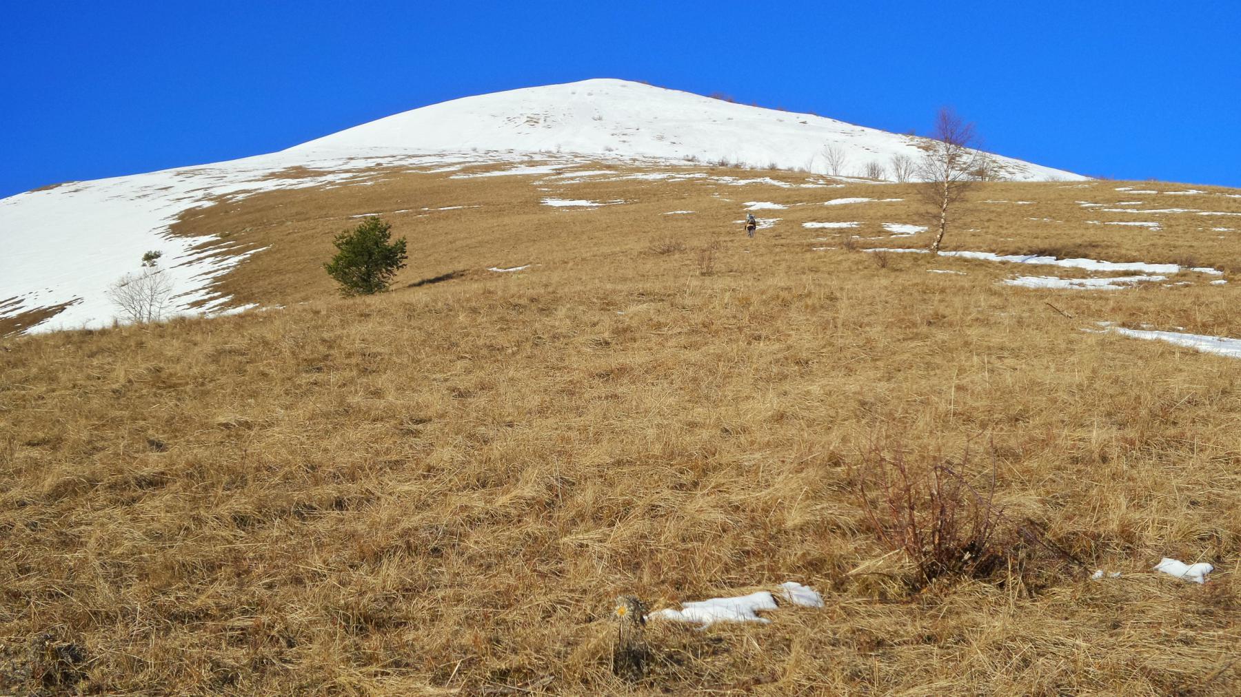 fino a 1800 m. di quota di neve pochissima oggi