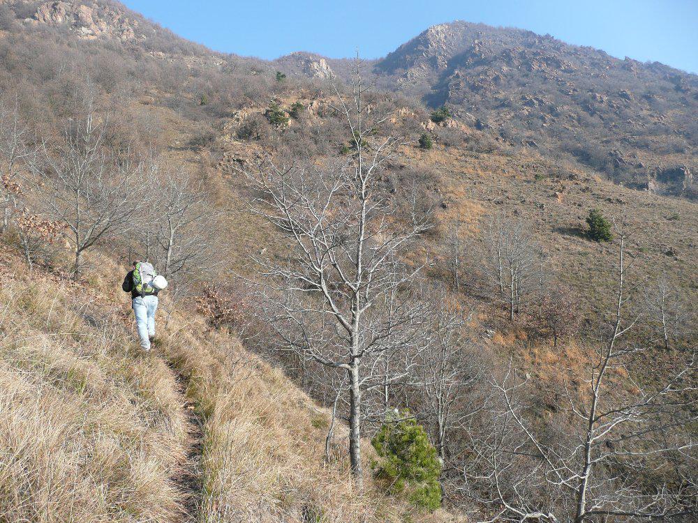 Avvicinamento da i Pioppi (Milanere), al centro sopra l'albero vediamo il secondo tronco della via con l'evidente scaglia. A destra sul rilievo principale si vede il canalone che divide i 2 speroni della via omonima.