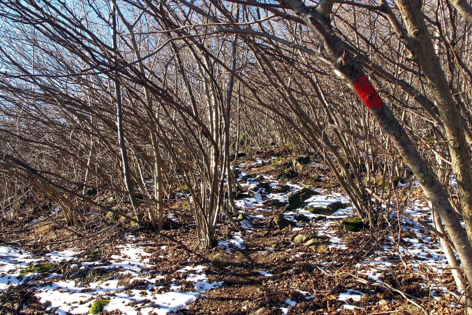 Oltre la Madonna della Neve la segnaletica è dipinta sugli alberi