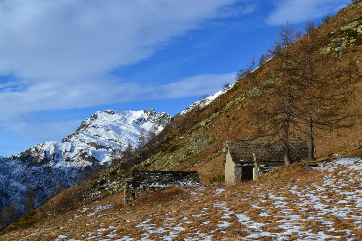 alpeggio in prossimità del colle e Pizzo Ciapè sullo sfondo