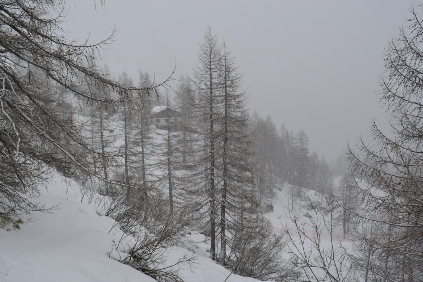 ritorno al Belvedere sotto la nevicata